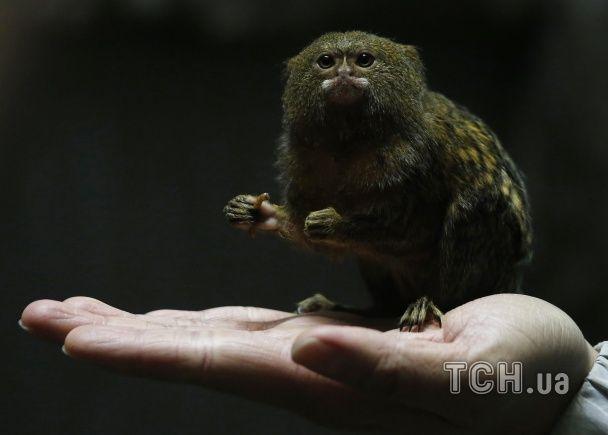 Найяскравіші фото дня: День бабака і найкрихітніша мавпа у світі