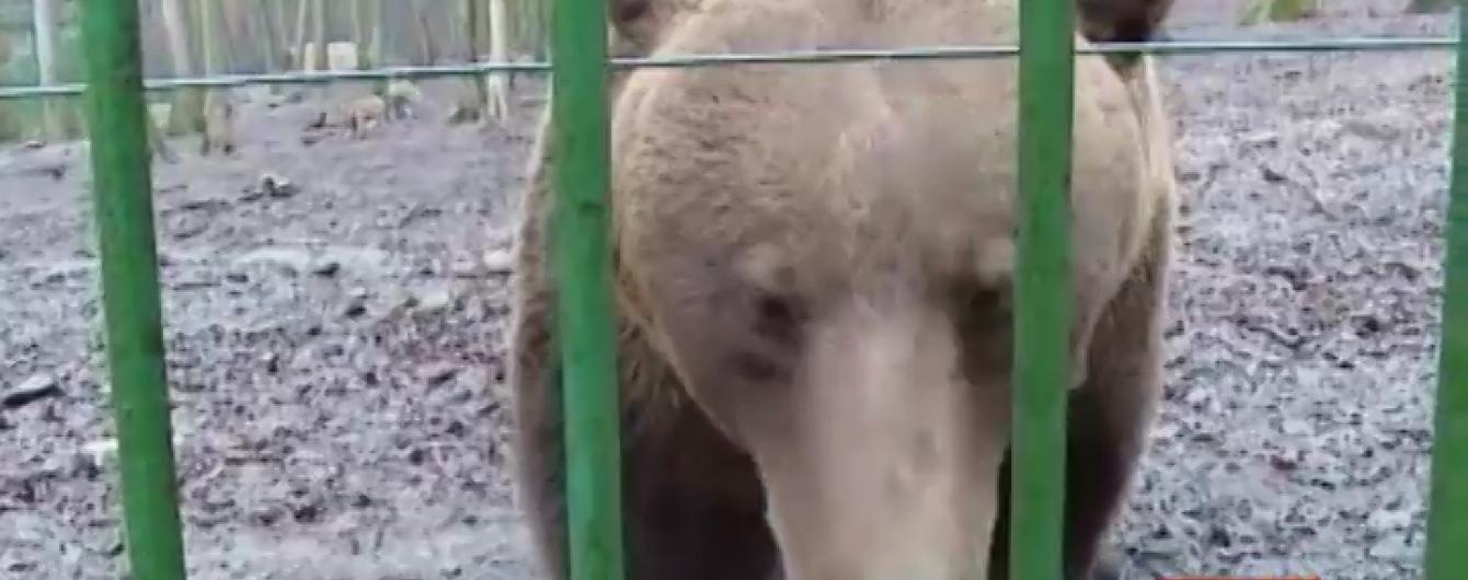 Румунський ведмідь-віщун напророкував швидкий кінець зими