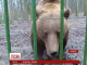 Ведмідь навіщував Румунії швидке закінчення зими