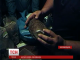 Весняне потепління активізувало нелегальних копачів бурштину на Житомирщині