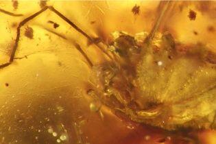 99 мільйонів років. Учені зафіксували найтривалішу ерекцію в історії