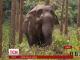 Японські зооактивісти розгорнули боротьбу довкола найстаршої в країні самиці слона