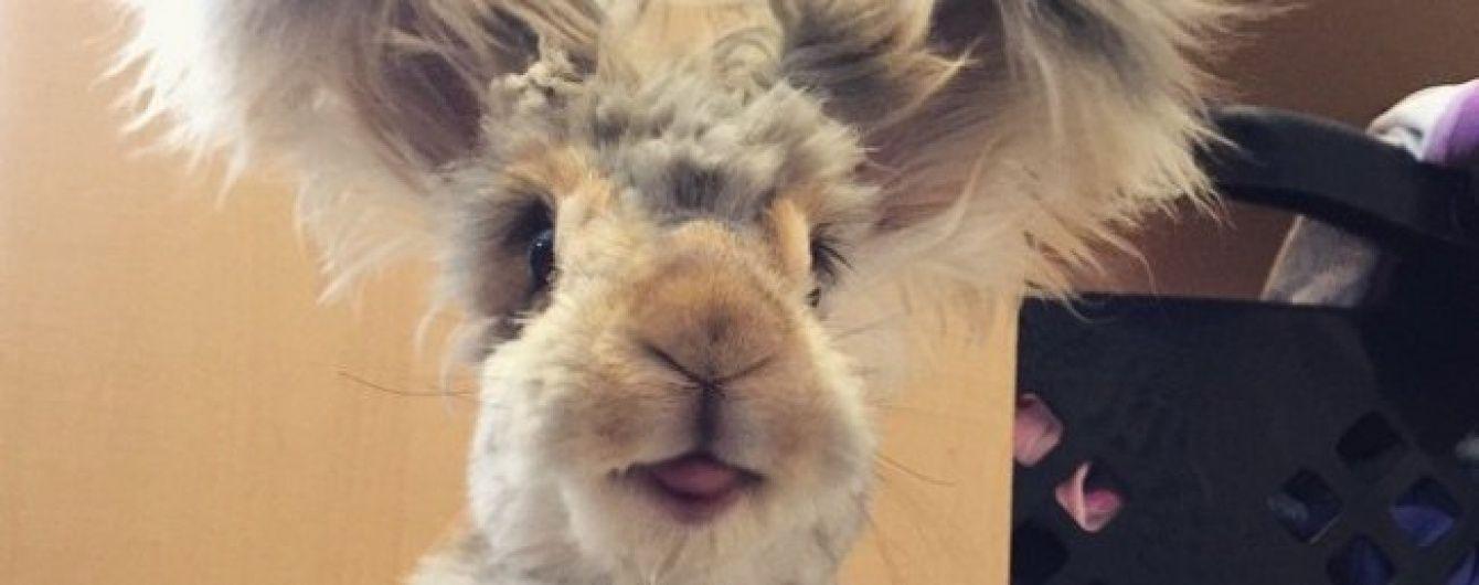 Інтернет-юзерів підкорив пухнастий кролик із величезними крило-вухами