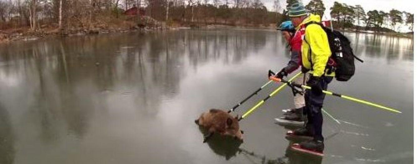 Юзерів Мережі підкорило зворушливе відео порятунку кабанів на замерзлому озері (відео)