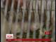 Американські вчені на третину подовжили життя мишам