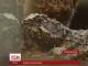 Рідкісна рептилія туатара вперше за 70 мільйонів років народилася за межами Нової Зеландії