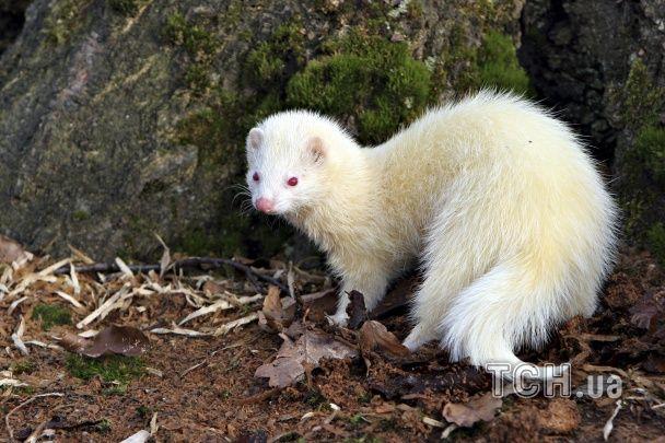 Рідкісна краса: як виглядають тварини альбіноси у природі