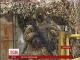 На Маріупольському напрямку активізувалися бойовики