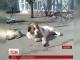 На Одещині з'явиться пам'ятник сенбернару Лорду - українському Хатіко