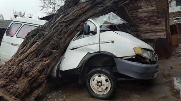 В Одесі через сильний вітер величезне дерево розчавило мікроавтобус