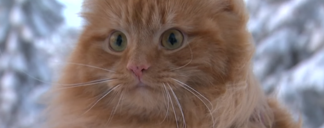 У Норвегії вигадлива господиня запрягла у лижі кота
