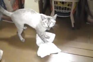 """Кіт-прибиральник продемонстрував на камеру, як він миє підлогу та """"кричить"""" на хазяїна"""