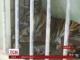 У зоопарку Індонезії народилося рідкісне суматранське тигреня