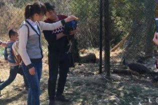 Відвідувачі зоопарку заради селфі закатували двох павичів