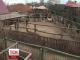 """Сімнадцять бабуїнів із Польщі відтепер житимуть у приморському """"Сафарі-парку"""""""