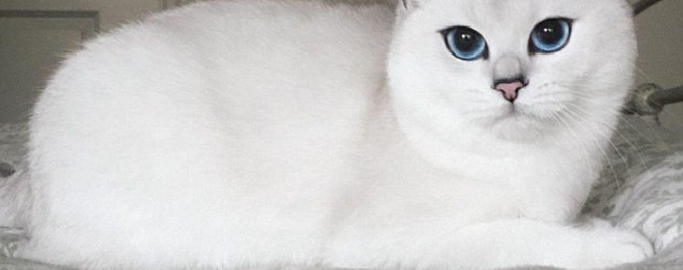 Учені виявили 25 ознак страждань кішок