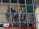 17 мавп-бабуїнів переселилися з Польщі до України