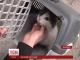 Масштабну спецоперацію з порятунку кота провели в Запоріжжі