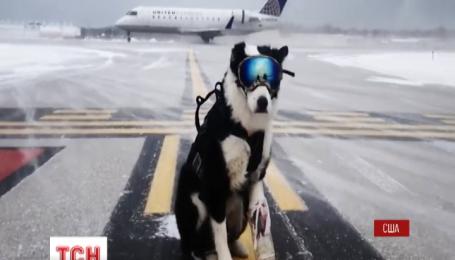 В аеропорту Мічигана на роботу взяли собаку на прізвисько Пайпер