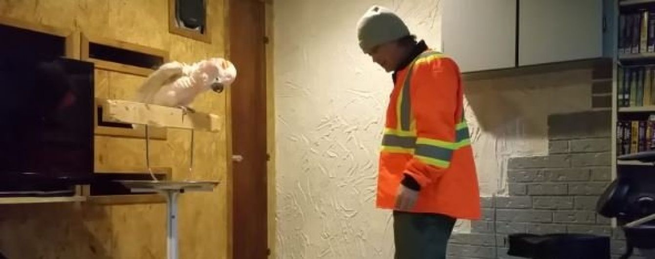 F*сking f*сk. Юзерів розсмішила реакція папуги на руйнування його клітки (відео)