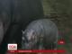 Зоопарк у Празі показав відвідувачам свого нового мешканця