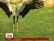 У Великобританії досліджують тендітну пташку, що здатна вбити змію одним ударом лапки