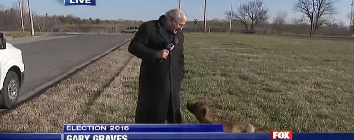 Грайливий собака не дав репортерові розповісти про візит Дональда Трампа