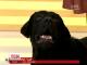 Вперше в історії українського телебачення собака став оператором