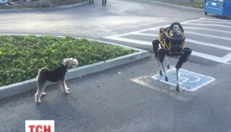 У мережі набуває популярності відео, як робот на прізвисько Спот розлютив пса Алекса