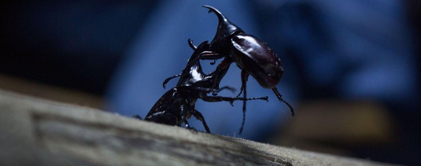 """""""Кінець світу"""": аргентинці нажахані нашестям жуків, які захопили все узбережжя"""