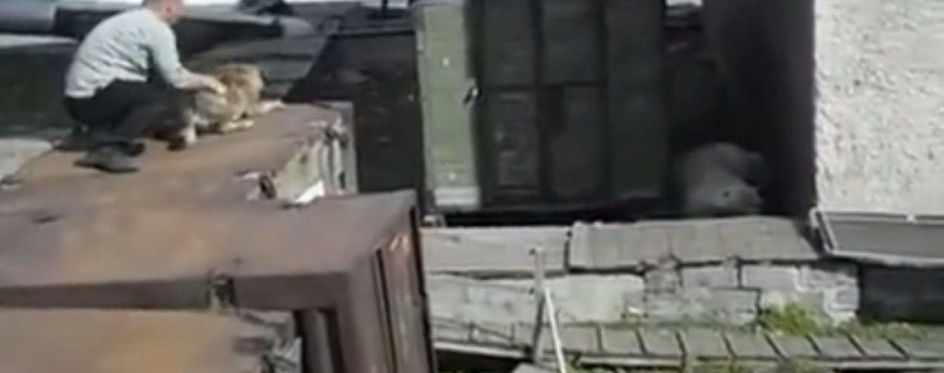 Згодувати заживо. У Росії чоловік задля розваги кинув живого собаку білому ведмедю на поталу