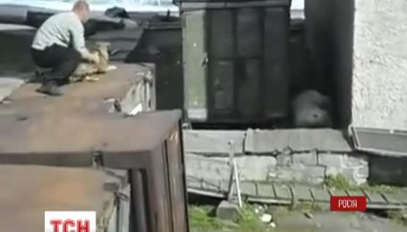 В России активисты разыскивают людей, которые кормят белого медведя живыми собаками