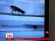 Американські інженери розробляють робота-рятувальника у вигляді таргана