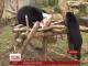 У німецькому зоопарку прощаються з двома очковими ведмедями