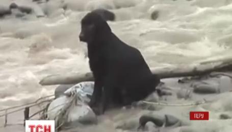 Рискованную операцию провели перуанские полицейские, чтобы спасти дворового щенка от наводнения