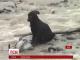 Ризиковану операцію провели перуанські поліцейські, аби врятувати дворове цуценя від повені