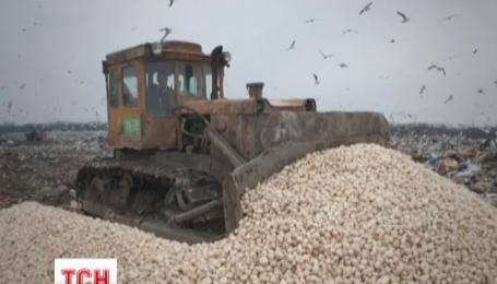 В России уничтожили почти 18 тонн польских шампиньонов