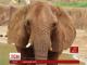 У США приземлився рейс зі слонами