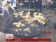 Чиновникам Ленінградської області розіслали пам'ятку щодо святкування Масниці