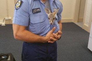 Юзеров умилило видео, на котором кенгуренок принял полицейского за свою маму