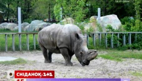 Носоріг із столичного зоопарку тяжко захворіла