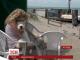 В Аргентині відкрили пляж для собак
