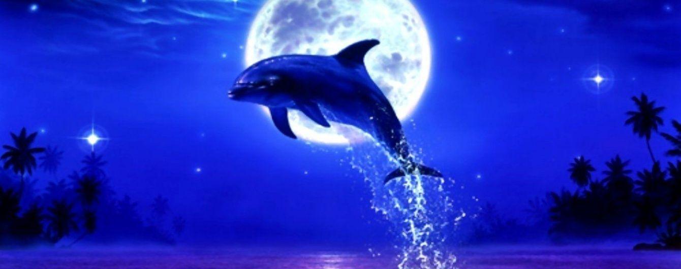 Опасности Дней Дельфина