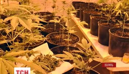 Волинські правоохоронці виявили плантацію марихуани просто в лікарні