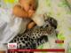 Мережу сколихнуло зворушливе відео немовляти, яке разом із дитинчам ягуара лежить у колисці