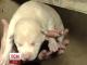 У Вінниці бабуся врятувала  собачу родину від безглуздої загибелі