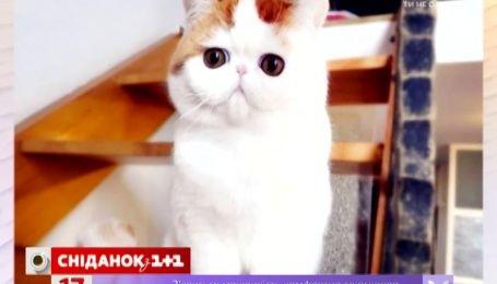 Какие породы кошек самые популярные и мире