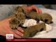 Маленькі гепарди борються за життя в американському зоопарку
