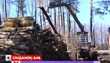 В Карпатах продолжают беспощадно воровать лес