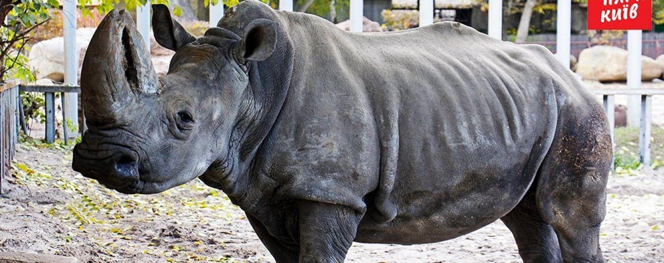 У Києві померла улюблениця зоопарку білий носоріг Тривога